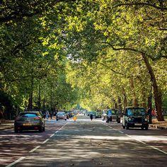 To the Palace! 🌳🇬🇧☀🚖 #london #buckingham #palace #tree #park #Nikon #D810 #cab #sunny #autumn #visitlondon #road #green