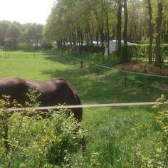 Foto's   Camping de Morgenster Camping, Horses, Animals, Photograph Album, Campsite, Animales, Animaux, Animal, Animais