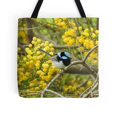 Superb Fairy Wren in wattle by BirdBags Small & Large