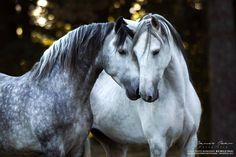 ❤️❤️The doctor' office called about my blood test, Mark. My Cholesterol is high but everything else is great❤️❤️ Funny Horses, Cute Horses, Pretty Horses, Horse Love, Horses And Dogs, Wild Horses, Horse Photos, Horse Pictures, Most Beautiful Horses