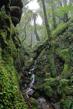 Rimutaka Forest Park New Zealand