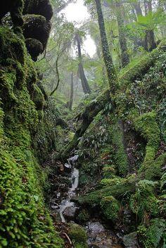 Rimutaka Forest Park New Zealand