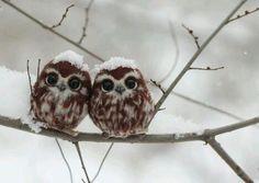 little owls  (via https://twitter.com )