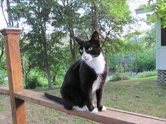 The garden cat at Austin Ayurveda. http://www.austinayurveda.com/