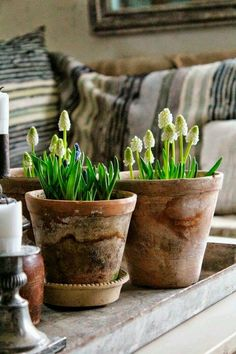 Container gardening is a fun way to add to the visual attraction of your home. You can use the terrific suggestions given here to start improving your garden or begin a new one today. Your garden is certain to bring you great satisfac Garden Bulbs, Garden Pots, Container Plants, Container Gardening, Indoor Garden, Indoor Plants, Potted Plants, Beautiful Gardens, Beautiful Flowers