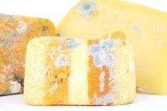 Age, Bacteria, Bio, Biology, Blue, Brie, Bug, Cheese (PUBLIC DOMAIN)