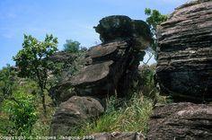 Imagen de http://cdn.c.photoshelter.com/img-get/I0000uIAYbtz2IgY/s/860/860/ecology-geology-brazil-highlands-JNGX0469.jpg.
