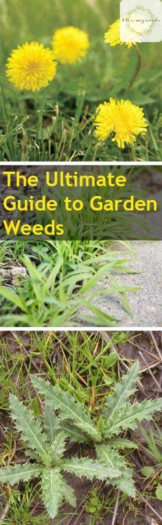 The Ultimate Guide to Garden Weeds - Garden Weeds Garden Weeds Guide Gardening Gardening Hacks Garden Care Weed Care for Your Garden Garden Care Garden Care, Gardening For Beginners, Gardening Tips, Vegetable Garden Tips, Perennial Vegetables, Garden Weeds, Garden Guide, Easy Garden, Lawn Care
