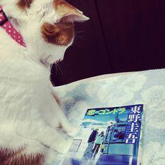 今日はこの本。 #東野圭吾#読書#趣味#本#恋のゴンドラ#愛猫家#愛猫#ペット#フォロー #book#hobby#cat#pet#instagood#instalike#instadiary#instamood#instalove#instafollow#instapic#instaphoto#followme