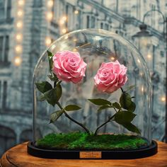 real enchanted rose forever rose london beauty and the beast Flowers Nature, Love Flowers, Fresh Flowers, Forever Rose, Forever Flowers, Flower Phone Wallpaper, Rose Wallpaper, Tatoo Rose, Enchanted Rose