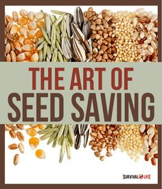 I recently learned about seed saving via a Kickstarter trailer for a documentary entitled, Seeds: The Untold Story.What is seed saving, you say? It's exactly what it sounds like! It is …