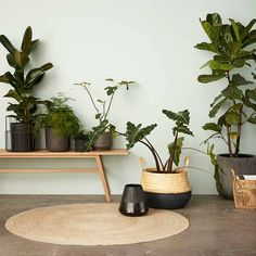 Modern Indoor bamboo basket with black contrast trim with free next day delivery Indoor Bamboo, Indoor Plant Pots, House Plants Decor, Plant Decor, Blankets For Winter, Jute Carpet, Oak Bench, Deco Nature, Low Light Plants