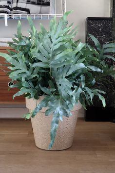 Zuperlarge plantpots for indoor. made from coffeeshell or straw-fibers