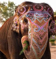 I have always wanted to ride an elephant. I think that it would be a once-in-a-life-time experience if i rode on one through a parade in India for a celebration.