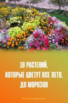 Ландшафтный Дизайн, Затененный Сад, Дизайн Овощного Огорода, Цветники, Горшечные Растения, Флора, Дизайн Дома, Сады, Покупка Товаров