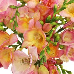 FiftyFlowers.com - Sunset Pink Freesia Flower