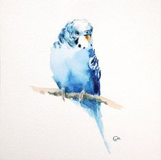 Budgerigar Parakeet - Original Watercolor Blue Bird Painting 7 4/5 x 7 4/5…
