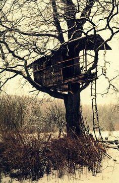 Abandoned treehouse~