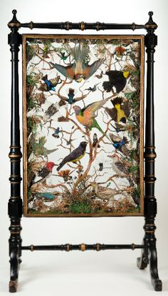 Victorian shadow box fire screen with taxidermy birds.