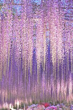 flores violeta Wisteria Flowers Vine Silk Flower Wedding Garden Hanging Decor & Garden Ashikaga Flower Park by Noe Arai