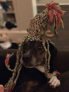 Toy turned hat.