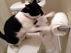 Easy cat discipline tips and advice that your cat will understand without violence. Find out how to stop bad cat behavior.