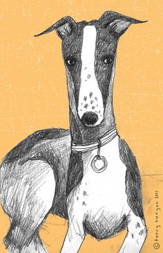 Greyhound--Terry Runyan; could be a great inspiration for value drawing and dog art. #puppied