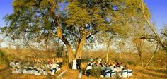 bushveld weddings - Google Search