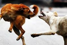 Indian street dogs have it pretty rough. But if you look closely, you could learn a thing or two from them.