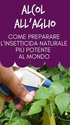 Alcol all'aglio: come preparare l'insetticida naturale più potente al mondo Growing Veggies, Make Me Up, How To Get Rid, Country Life, Good To Know, Garden Plants, Flora, Diy, Gardening