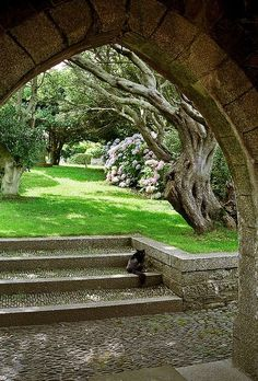 St Michael's Mount Gardens, Cornwall, England  | View of gnarled tree through arch near garden entrance by proteamundi
