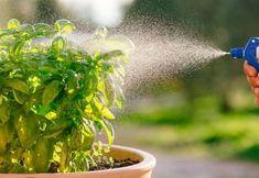 9 Λόγοι για να Χρησιμοποιείτε Λευκό Ξύδι στον Κήπο σας Herbs, Tips, Plants, Photography, Photograph, Advice, Fotografie, Herb, Photo Shoot