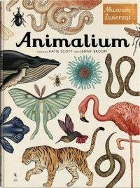 Animalium. Muzeum Zwierząt - Jenny Broom, Katie Scott - Książka - Księgarnia internetowa Bonito.pl
