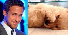 Who's cuter, Ryan or a Puppy?  Reblog your choice.