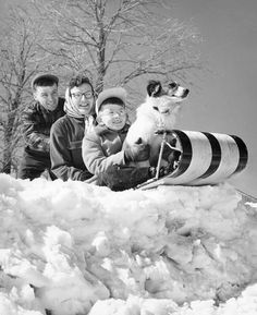 The family that sleds together, stays together... in 1956 Milwaukee. That first drop looks a little rough.