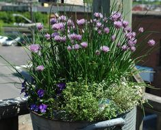 Cheap 'n Easy Container Idea – Chive Basin  –  You Grow Girl