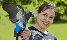 African Grey Parrot named Wunsy saves owner from mugger by squawking and flapping its wings: