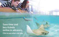 Shedd Aquarium - Chicago | Home
