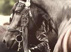 Beautiful Hungarian style decorations on bridle