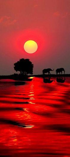 Sunset with Elephants