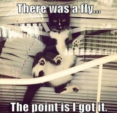 Don't worry... The cat got the fly!
