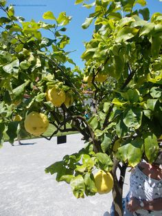 Special fruits on the island