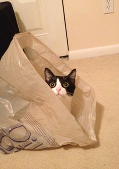 Cats love bags                                                   #kittens #funnycats #cats