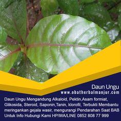 Tawk to pengobatan benjolan wasir Herbalism, Plant Leaves, Plants, Faces, Acute Accent, Planters, Herbal Medicine, Plant