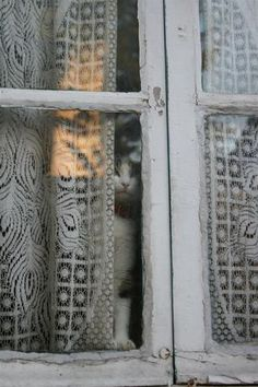 """There's just something about a window with some age to it...with delicate lace curtains and a little cat peering through the wavy glass. It says """"home"""" to me. ^-^ <3"""