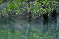 gently flowing stream Photo by Teruo Araya — National Geographic Your Shot