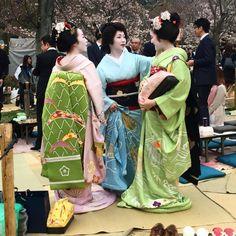 "geisha-kai: ""April 2017: maiko Kanohiro, geiko Hinagiku, and maiko Hinayuu at hanami (cherry blossom viewing) by sarahcrawley on Instagram """