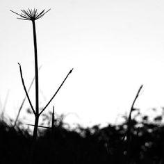 A veces soy más vegetal que animal... dejando que el viento me acune, y nada más...