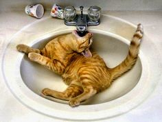 Kat heeft dorst.