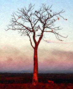 Boab tree - Kununurra, Western Australia